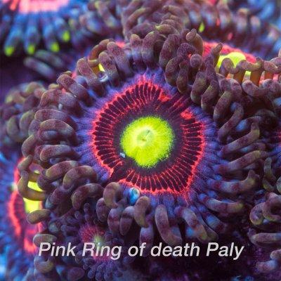 Pink-ring-1200x1200.jpg