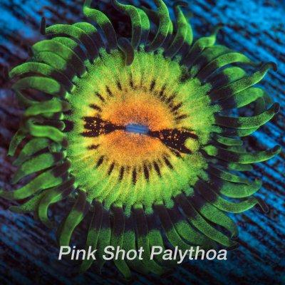 pink-shot-1200x1200.jpg