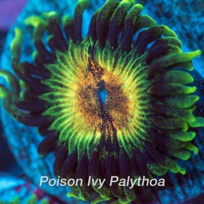 poison-ivy-1200x1200.jpg