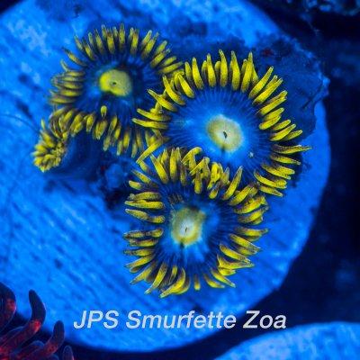 smurfettes-1200x1200.jpg