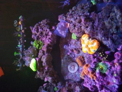 wb corals added.jpg