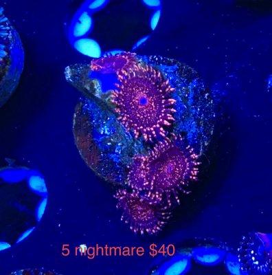 0290C571-1C24-497C-AFD4-750D98E0849F.jpeg