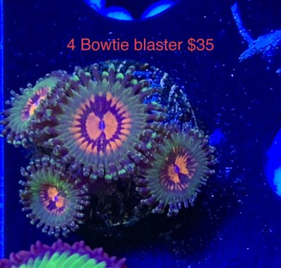 2D17D142-ACBD-4382-A0BA-8C34549BA0E0.jpeg