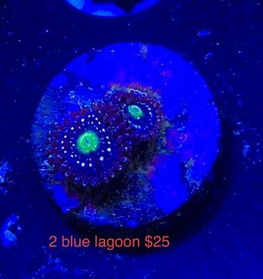486E06EC-71C8-46B3-B485-6351D50E2A6E.jpeg
