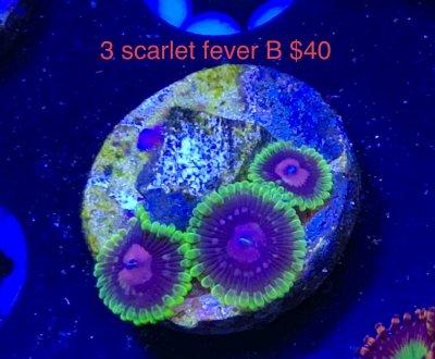 B681BD6B-DDCF-45DA-BD1E-0B3296C8C090.jpeg