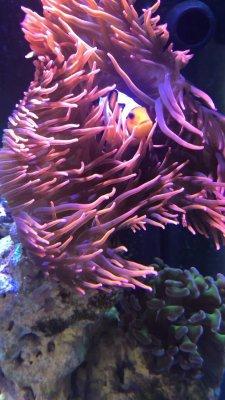 Nemo 3.jpg