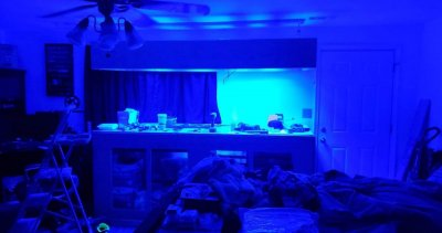 blue tank lights.jpeg