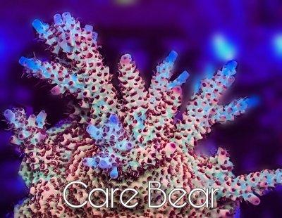 care bear.jpg