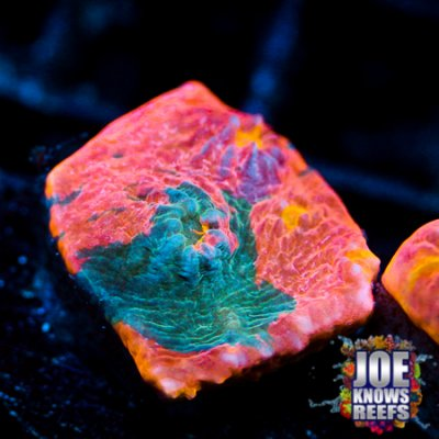 Joes Watercolor Rainbow Chalice.jpg