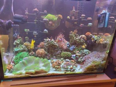 Reef Tank 11_8_2020.jpg