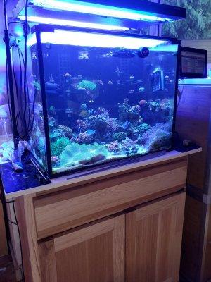 Reef Tank 2 11_8_2020.jpg