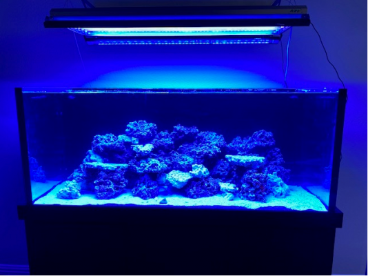 First Tank Picture.PNG