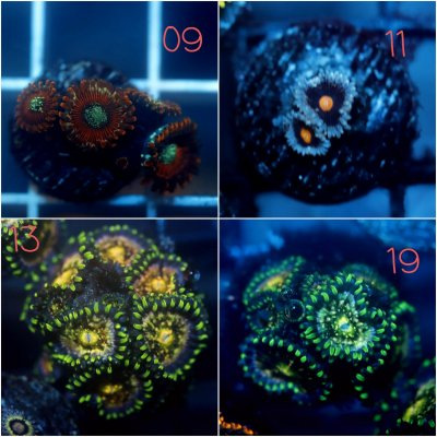 Z 02 PicsArt_11-25-09.35.09.jpg