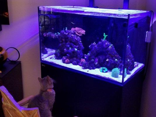 Cat fish.jpg