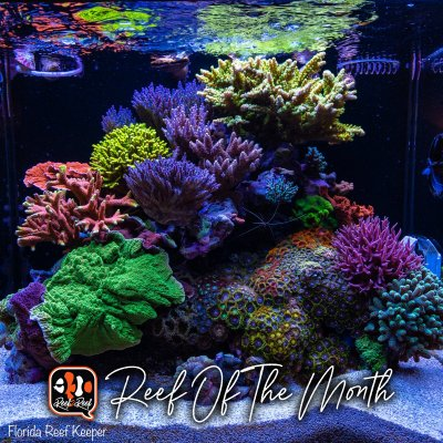 REEF OF THE MONTH - March 2021: Florida_Reef_Keeper Brandon McHenry's Amazing AIO SPS Reef!