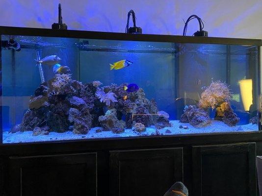 Keith's 210 mixed reef.JPG