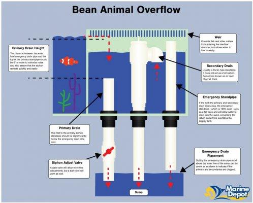 bean-animal-2.jpg