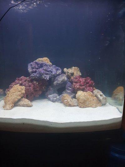 First Reef Tank.jpg