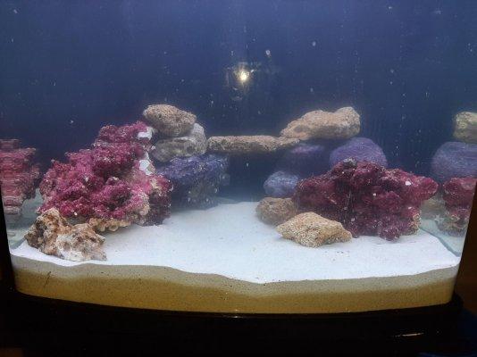 Reef tank aquascape 2.jpg