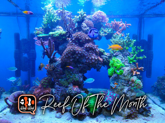REEF OF THE MONTH - April 2021: Jack Ravensbergen's Awesome Cube Reef!