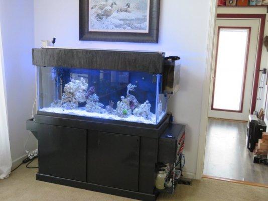 75 Gallon Soft Coral Tank.JPG