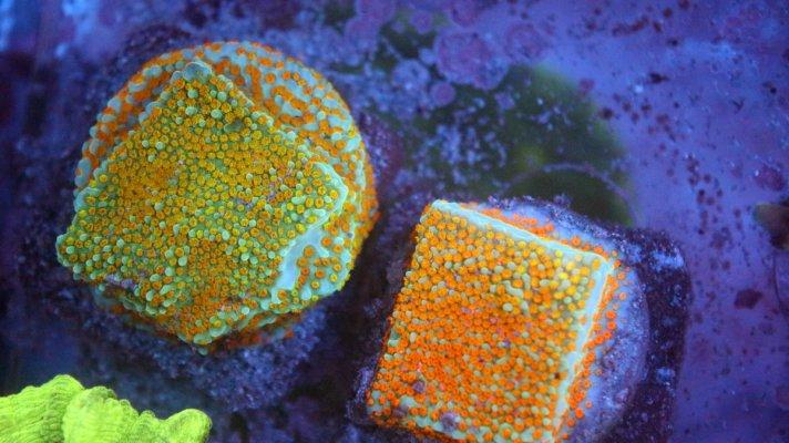 pebbles frags.JPG