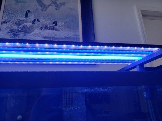 Light 3.jpg