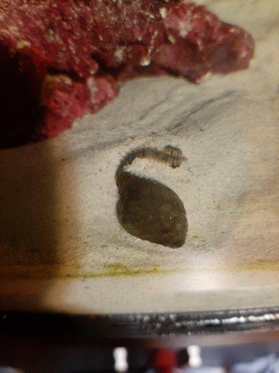 Bristle worm 1.jpg