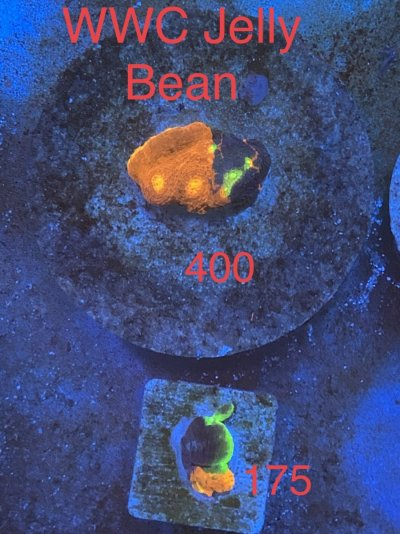 F0CD4D37-048F-46F7-BC12-6ABE89970F8C.jpeg