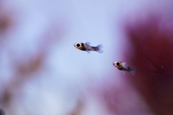 fish 1.jpeg