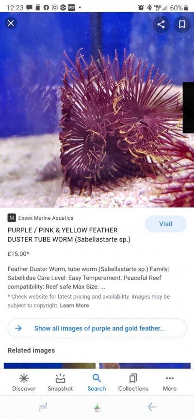 Screenshot_20210423-122324_Google.jpg