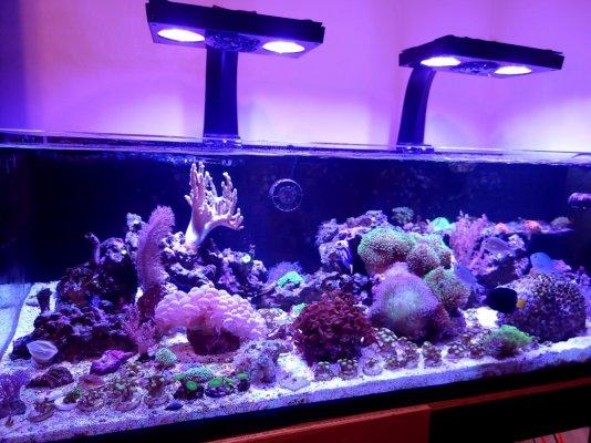65 gallon reef.jpg