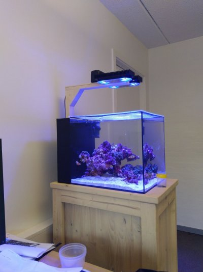 office tank.jpg