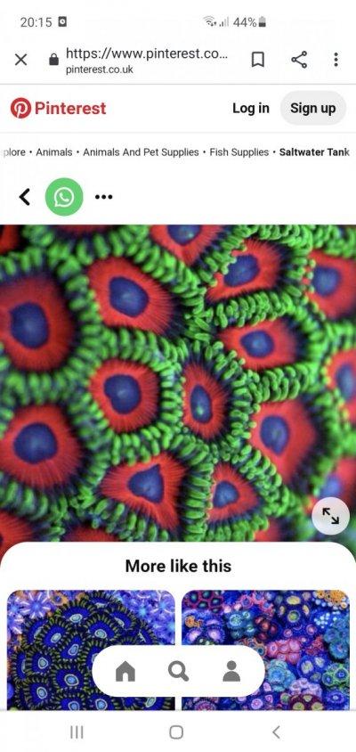 Screenshot_20210507-201509_Chrome.jpg