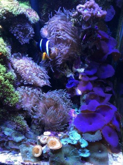 clown&coral.jpg