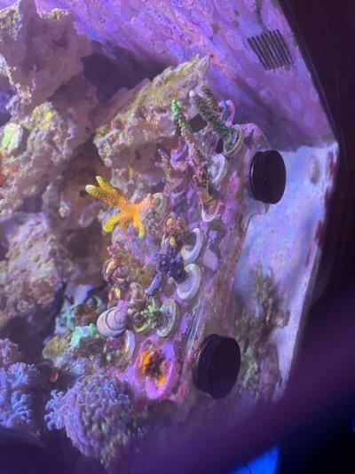 coral (3).jpeg
