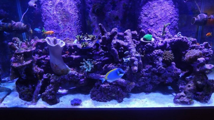 120 Miced Reef.jpeg