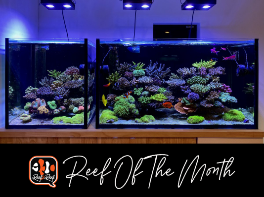 REEF OF THE MONTH - June 2021: Takaki1980's Beautiful Japanese Style SPS Reef!!