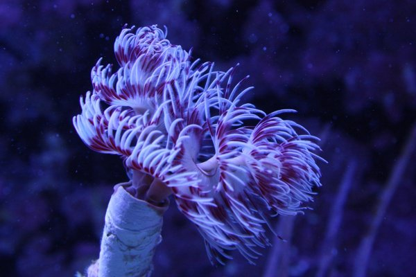 Feather Duster 1.jpg