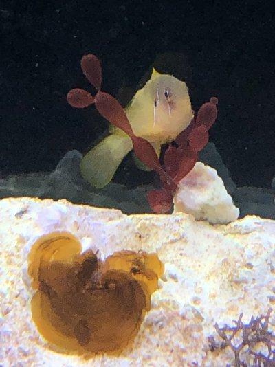fish (4).jpg