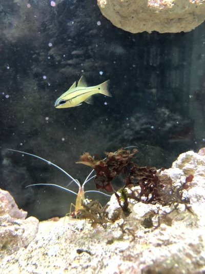fish 2 (3).jpg