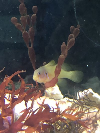 fish 2 (4).jpg