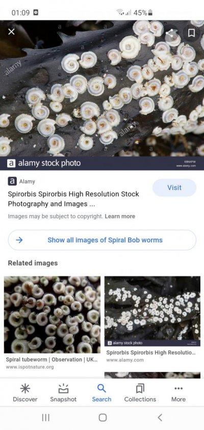 Screenshot_20210628-010934_Google.jpg