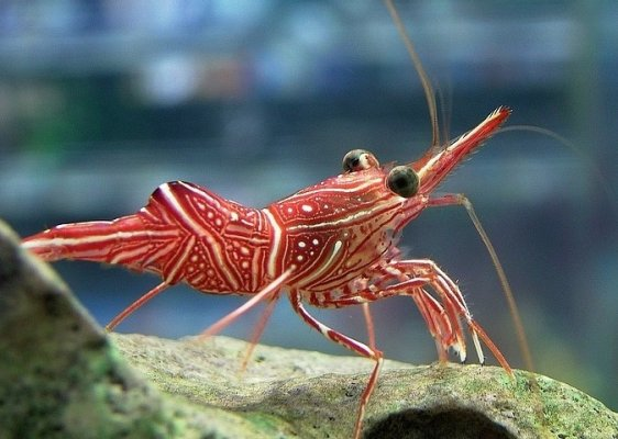 camel-shrimp.jpg
