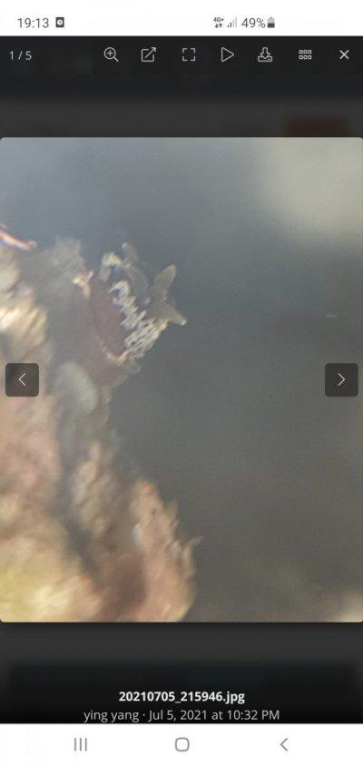 Screenshot_20210706-191341_Chrome.jpg