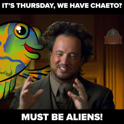 Must be Aliens.png