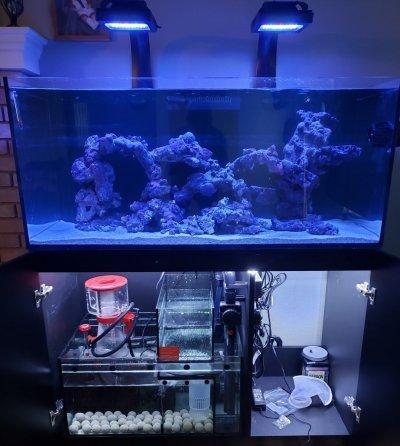 Reef Tank (1).jpg