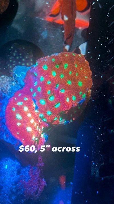 B06EA062-DA06-465E-9ACA-FCBF237C8F4B.jpeg
