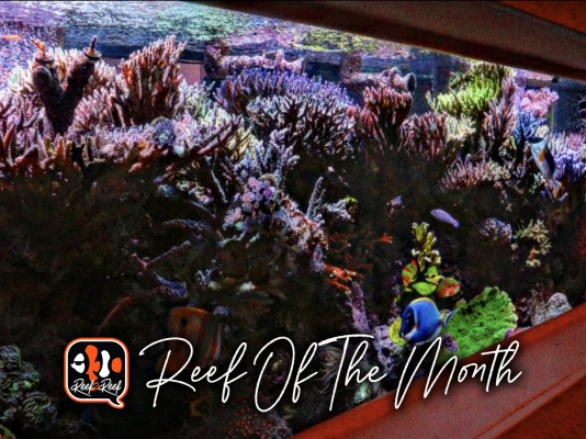 REEF OF THE MONTH - August 2021: Duke's SPS Utopia