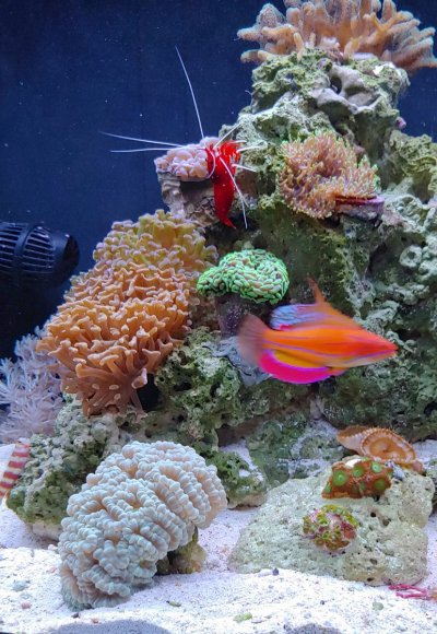 Aquarium 9 month anniversary - Feb 3_edited.jpg